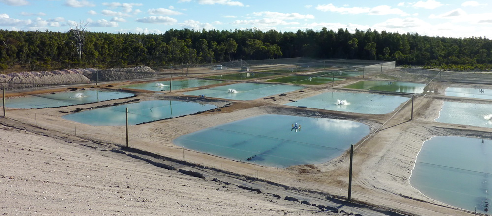 Coal mine pit lake aquaculture